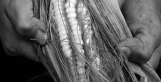 Maíz, Daniela Parra, tomada de Flickr Creative Commons