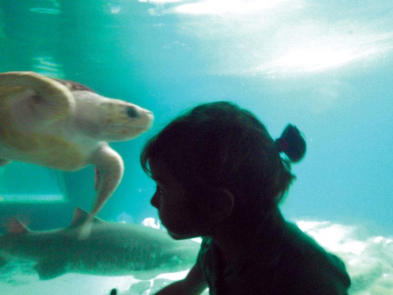 New York Aquarium, Horacio Martos, 2012.