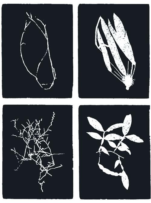 Capítulo III Costa Rica. Del Herbario Nacional UNAM, esmalte y tinta epóxica sobre metal, 50 paneles de 40 x 30 c/u, 2010.